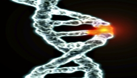 Addiction Search - Genetic Predisposition